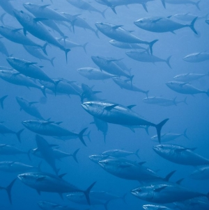 El sector pesquero mexicano, comprometido con la protección y conservación de la biodiversidad