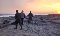 Arribaron a desovar 2.2 millones de tortugas marinas en las costas de Oaxaca, temporada anterior