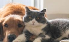 Las mascotas animales no transmiten el coronavirus SARS CoV-2 que transmite la Covid-19: Francisco Monroy (UNAM)