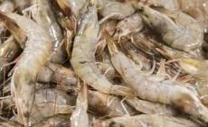 China ahora apunta contra los camarones tras muestras que dieron positivo a COVID-19