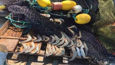 Gobierno prohíbe uso de redes de pesca tradicionales en hábitat de vaquita marina