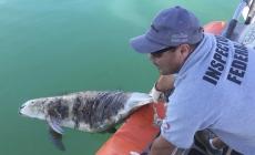 """Senadora Nancy Sánchez urge mesa técnica para resolver conflicto entre pesca y conservación en el Alto Golfo de California… la """"tierra de nadie"""""""