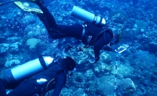 Conectividad ecológica estudiada por científicos mexicanos, confirmaría que en Veracruz existe la segunda barrera arrecifal más grande de América