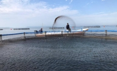 Libre de Covid-19 toda la producción pesquera de Tamaulipas