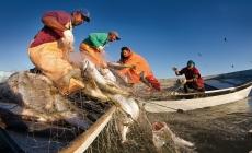 En México, de la pesca y acuacultura dependen 235 mil empleos, y un volumen de producción con valor de 42 mil MDP