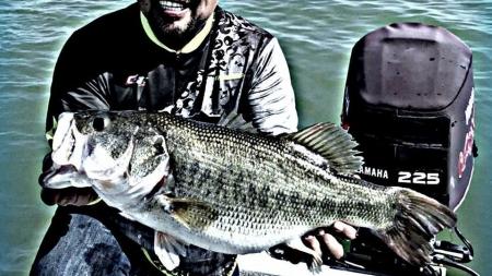 Pesca de black bass (lobina); arreglos básicos para la pesca con plásticos (vinilos)