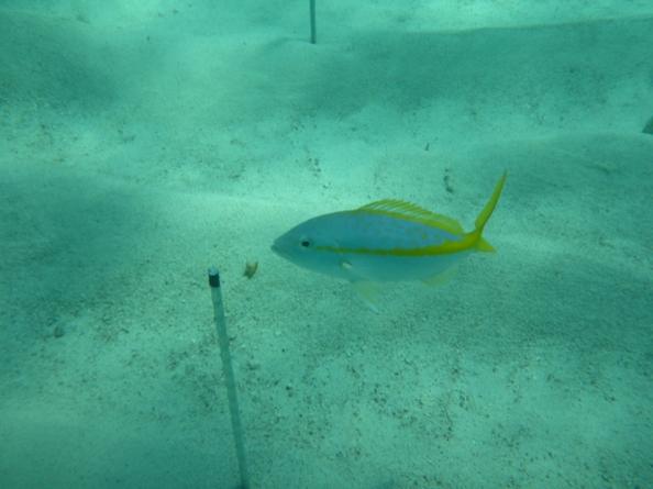 BiteMap: un mapa global que revela que las redes tróficas marinas pueden cambiar con el clima